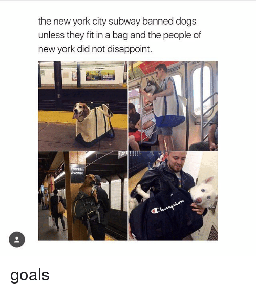 Dogs, Goals, and Memes: the new york city subway banned dogs  unless they fit in a bag and the people of  newyork did not disappoint.  ranklin goals