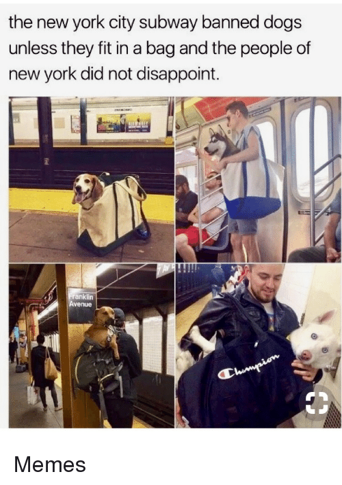 Avenue: the new york city subway banned dogs  unless they fit in a bag and the people of  new york did not disappoint.  anklin  Avenue Memes