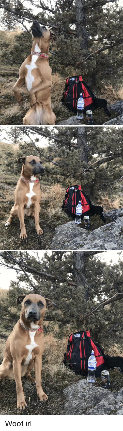 North Face, Irl, and Dog IRL: THE  NORTH  FACE  1PA Woof irl