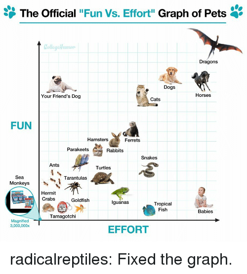 """rabbits: The Official """"Fun Vs. Effort"""" Graph of Pets '  Dragons  Dogs  Your Friend's Dog  Horses  Cats  FUN  Hamsters  Ferrets  Parakeets  Rabbits  Snakes  Ants  Turtles  Sea  Monkeys  Tarantulas  Hermit  Crabs  Goldfish  lguanas  Tropical  Fish  Babies  Tamagotchi  Magnified  3,000,000x  EFFORT radicalreptiles:  Fixed the graph."""