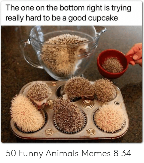 Animals Memes: The one on the bottom right is trying  really hard to be a good cupcake 50 Funny Animals Memes 8 34