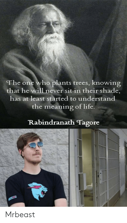 Sit In: The one who plants trees, knowing  that he will never sit in their shade,  has at least started to understand  the meaning of life  Rabindranath Tagore Mrbeast