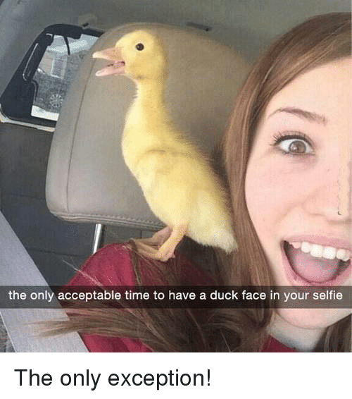 Memes, Duck, and Ducks: the only acceptable time to have a duck face in your selfie The only exception!
