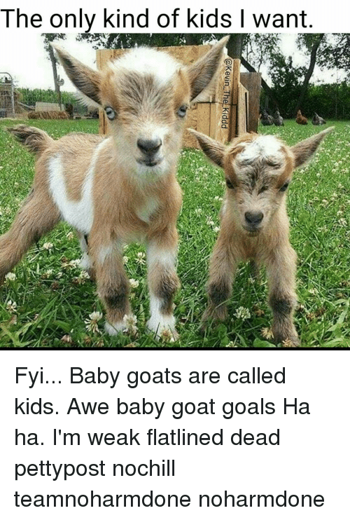 Memes, Baby Goat, and Baby Goats: The only kind of kids l want Fyi... Baby goats are called kids. Awe baby goat goals Ha ha. I'm weak flatlined dead pettypost nochill teamnoharmdone noharmdone