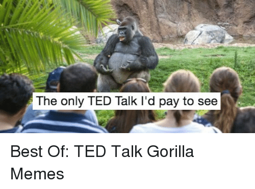 Gorilla Memes: The only TED Talk I'd pay to see <p>Best Of: TED Talk Gorilla Memes</p>