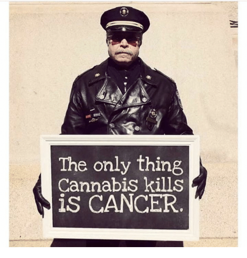Cannabies: The only thing  Cannabis kills  is CANCER