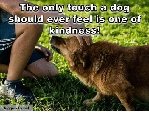 Memes, Planets, and Touche: The only touch a dog  should ever feel is one of  kindness!  Doggies Planet