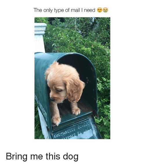 Dogs: The only type of mail l need Bring me this dog
