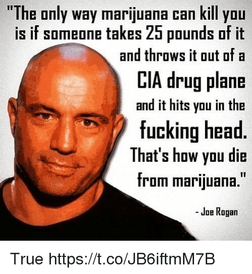 Joe Rogan: The only way marijuana can kill yOu  is if someone takes 25 pounds of it  CIA drug plane  fucking head  and throws it out ofa  and it hits you in the  That's how you die  from marijuana.  - Joe Rogan True https://t.co/JB6iftmM7B