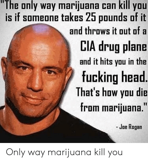 "Joe Rogan: ""The only way marijuana can kill you  is if someone takes 25 pounds of it  and throws it out of a  LIA drug plane  and it hits you in the  fucking head  That's how yau die  from marijuana.""  - Joe Rogan Only way marijuana kill you"