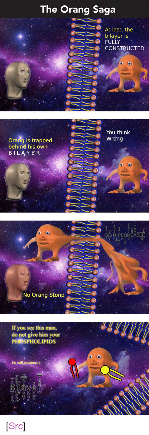 """iman: The Orang Saga  .  At last, the  bilayer is  FULLY  CONSTRUCTED  @ーミン wrong  You think  Orang is trapped  behind his own  BILAYER  No Orang Stonp  : If you see this iman,  do not give him your  PHOSPHOLIPIDS  He will construet a <p>[<a href=""""https://www.reddit.com/r/surrealmemes/comments/82h8yf/s_e_m_i_p_e_r_m_e_a_b_l_e_full_orang_saga/"""">Src</a>]</p>"""