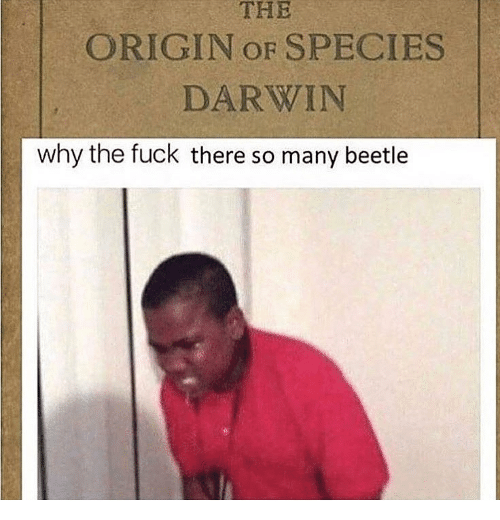 The Origin Of: THE  ORIGIN OF SPECIES  DARWIN  why the fuck there so many beetle