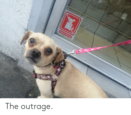 Outrage: The outrage.