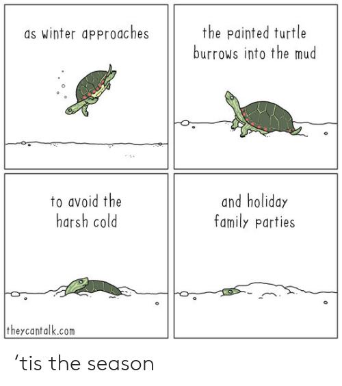 Harsh: the painted turtle  burrows into the mud  as winter approaches  to avoid the  harsh cold  and holiday  family parties  theycantalk.com 'tis the season
