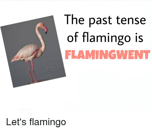 the flamingo rising character analysis Breakfast of champions study guide contains a biography of author kurt vonnegut, literature essays, quiz questions, major themes, characters, and a full summary and analysis.