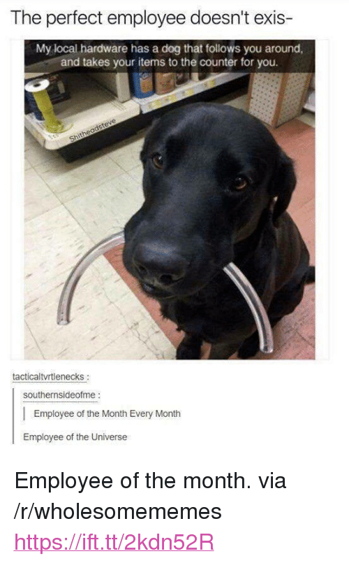 """Dog, Local, and Universe: The perfect employee doesn't exis-  My local hardware has a dog that follows you around,  and takes your items to the counter for you.  tacticaltvrtlenecks  southernsideofme:  Employee of the Month Every Month  Employee of the Universe <p>Employee of the month. via /r/wholesomememes <a href=""""https://ift.tt/2kdn52R"""">https://ift.tt/2kdn52R</a></p>"""