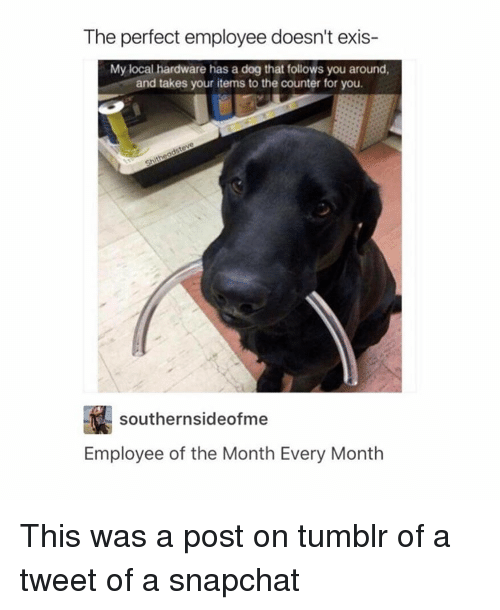 Dogs, Snapchat, and Tumblr: The perfect employee doesn't exis-  My local hardware has a dog that follows you around,  and takes your items to the counter for you.  southern sideofme  Employee of the Month Every Month This was a post on tumblr of a tweet of a snapchat