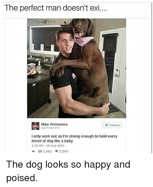 Memes, Working Out, and 🤖: The perfect man doesn't exi...  Mike Primavera  Follow  aprimawesome  I only work out so I'm strong enough to hold every  breed of dog like a baby.  2:36 AM 10 Aug 2015  1.461  2.543 The dog looks so happy and poised.