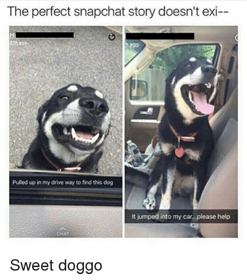 Ironic, Doggo, and Car: The perfect snapchat story doesn't exi--  h ago  Pulled up in my drive way to find this dog  It jumped into my car...please help  CHAT Sweet doggo