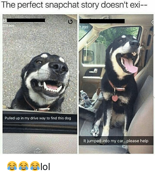 Memes, Snapchat, and Chat: The perfect snapchat story doesn't exi  h ago  Pulled up in my drive way to find this dog  It jumped into my car...please help  CHAT 😂😂😂lol