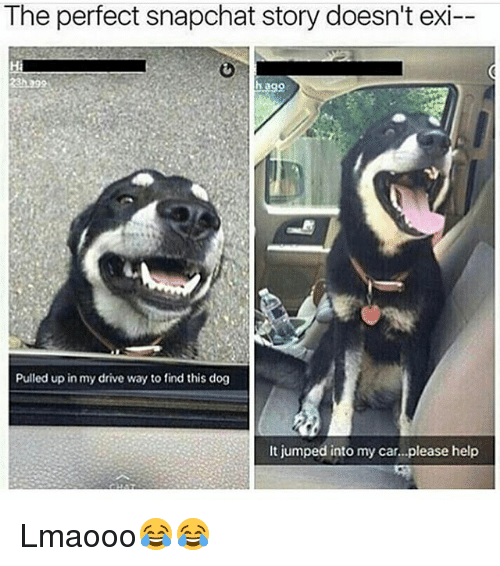 Memes, Snapchat, and Drive: The perfect snapchat story doesn't exi--  Pulled up in my drive way to find this dog  It jumped into my car...please help Lmaooo😂😂