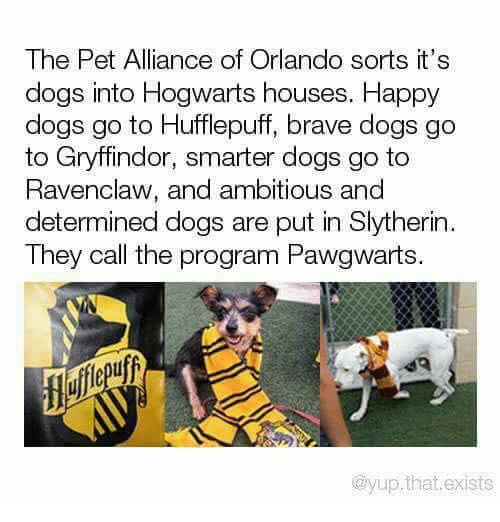 Gryffindor: The Pet Alliance of Orlando sorts it's  dogs into Hogwarts houses. Happy  dogs go to Hufflepuff, brave dogs go  to Gryffindor, smarter dogs go to  Ravenclaw, and ambitious and  determined dogs are put in Slytherin  They call the program Pawgwarts.  @yup.that.exists