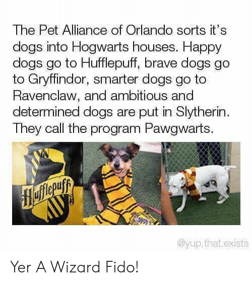 Orlando: The Pet Alliance of Orlando sorts it's  dogs into Hogwarts houses. Happy  dogs go to Hufflepuff, brave dogs go  to Gryffindor, smarter dogs go to  Ravenclaw, and ambitious and  determined dogs are put in Slytherin  They call the program Pawgwarts.  flefferuyy  AUУ  @yup.that.exists Yer A Wizard Fido!