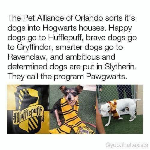 Orlando: The Pet Alliance of Orlando sorts it's  dogs into Hogwarts houses. Happy  dogs go to Hufflepuff, brave dogs go  to Gryffindor, smarter dogs go to  Ravenclaw, and ambitious and  determined dogs are put in Slytherin  They call the program Pawgwarts.  flefferuyy  @yup.that.exists