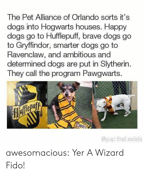 Orlando: The Pet Alliance of Orlando sorts it's  dogs into Hogwarts houses. Happy  dogs go to Hufflepuff, brave dogs go  to Gryffindor, smarter dogs go to  Ravenclaw, and ambitious and  determined dogs are put in Slytherin  They call the program Pawgwarts.  flefferuyy  AUУ  @yup.that.exists awesomacious:  Yer A Wizard Fido!
