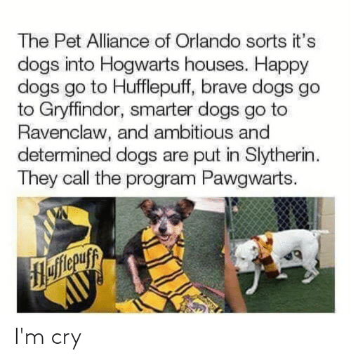 Orlando: The Pet Alliance of Orlando sorts it's  dogs into Hogwarts houses. Happy  dogs go to Hufflepuff, brave dogs go  to Gryffindor, smarter dogs go to  Ravenclaw, and ambitious and  determined dogs are put in Slytherin  They call the program Pawgwarts. I'm cry