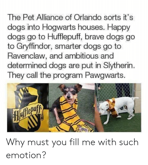 Orlando: The Pet Alliance of Orlando sorts it's  dogs into Hogwarts houses. Happy  dogs go to Hufflepuff, brave dogs go  to Gryffindor, smarter dogs go to  Ravenclaw, and ambitious and  determined dogs are put in Slytherin  They call the program Pawgwarts. Why must you fill me with such emotion?