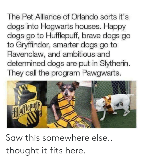 Orlando: The Pet Alliance of Orlando sorts it's  dogs into Hogwarts houses. Happy  dogs go to Hufflepuff, brave dogs go  to Gryffindor, smarter dogs go to  Ravenclaw, and ambitious and  determined dogs are put in Slytherin  They call the program Pawgwarts. Saw this somewhere else.. thought it fits here.