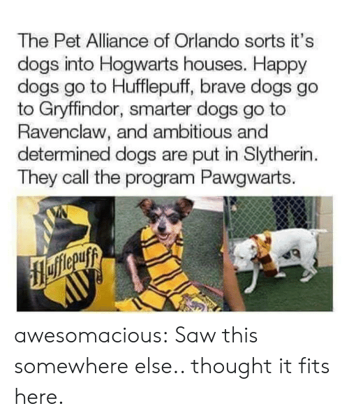 Orlando: The Pet Alliance of Orlando sorts it's  dogs into Hogwarts houses. Happy  dogs go to Hufflepuff, brave dogs go  to Gryffindor, smarter dogs go to  Ravenclaw, and ambitious and  determined dogs are put in Slytherin  They call the program Pawgwarts. awesomacious:  Saw this somewhere else.. thought it fits here.