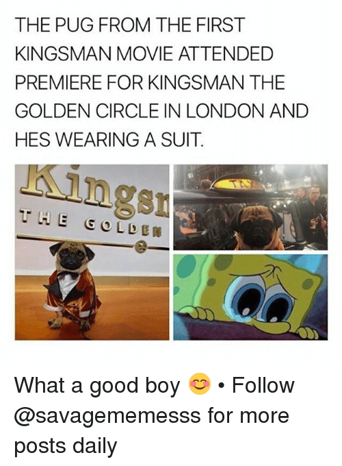 kingsman: THE PUG FROM THE FIRST  KINGSMAN MOVIE ATTENDED  PREMIERE FOR KINGSMAN THE  GOLDEN CIRCLE IN LONDON ANDD  HES WEARING A SUIT  ngs What a good boy 😊 • Follow @savagememesss for more posts daily