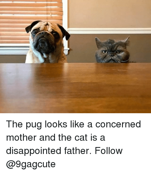 Disappointed, Memes, and 🤖: The pug looks like a concerned mother and the cat is a disappointed father. Follow @9gagcute