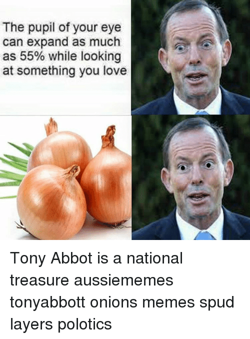 Memes, Onion, and Layers: The pupil of your eye  can expand as much  as 55% while looking  at something you love Tony Abbot is a national treasure aussiememes tonyabbott onions memes spud layers polotics