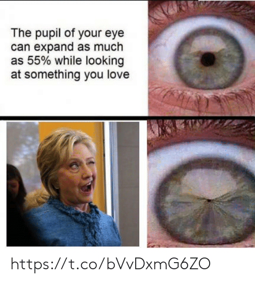 Pupil: The pupil of your eye  can expand as much  as 55% while looking  at something you love https://t.co/bVvDxmG6ZO