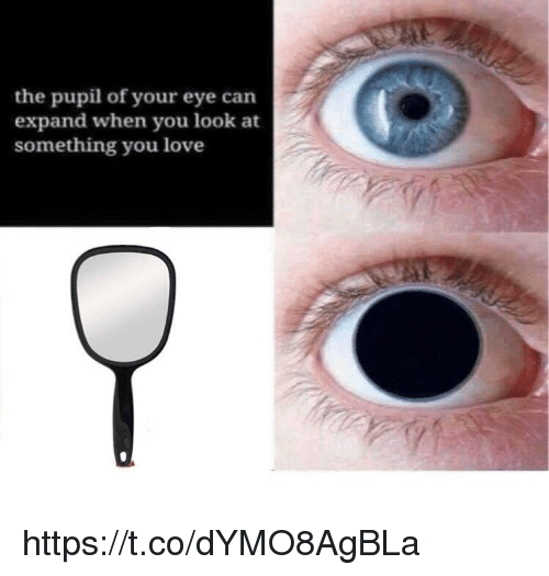 Love, Memes, and 🤖: the pupil of your eye can  expand when you look at  something you love https://t.co/dYMO8AgBLa