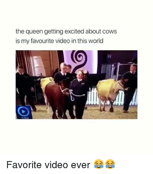 Dank, Queen, and Video: the queen getting excited about cows  is my favourite video in this world  2 mS Favorite video ever 😂😂