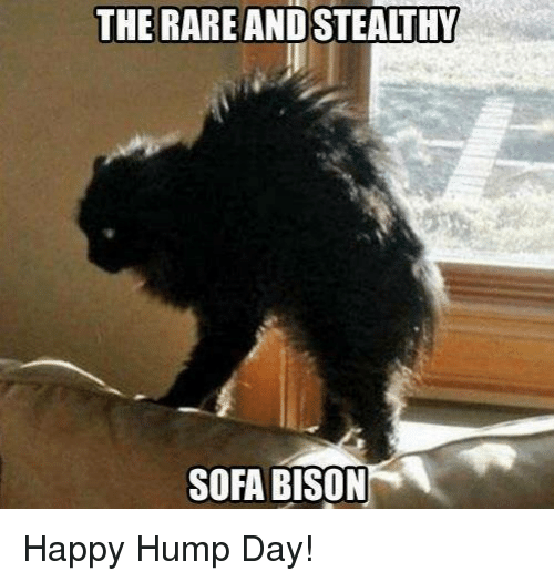 Happy Hump Day Meme Funny : Best memes about hump day