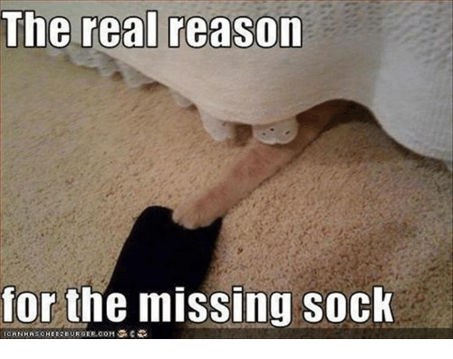Missing Socks: The real reason  for the missing sock  CANHASCHEIEREURGER.00M