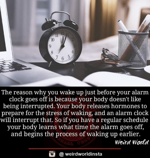 Interrupted: The reason why you wake up just before your alarm  clock goes off is because your body doesn't like  being interrupted. Your body releases hormones to  prepare for the stress of waking, and an alarm clock  will interrupt that. So if you have a regular schedule  your body learns what time the alarm goes off,  and begins the process of waking up earlier.  Weird World  @ weirdworldinsta