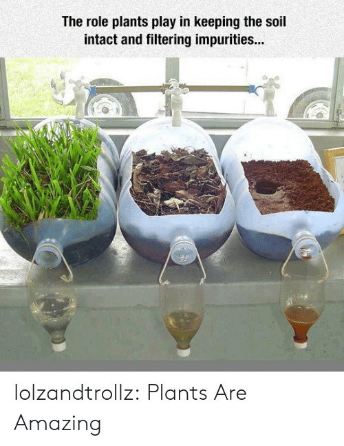 soil: The role plants play in keeping the soil  intact and filtering impurities... lolzandtrollz:  Plants Are Amazing