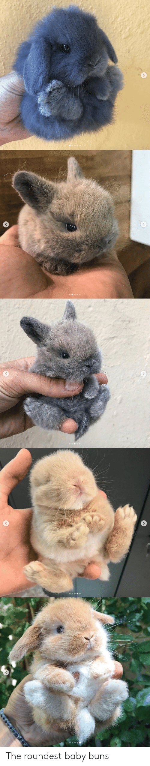 buns: The roundest baby buns