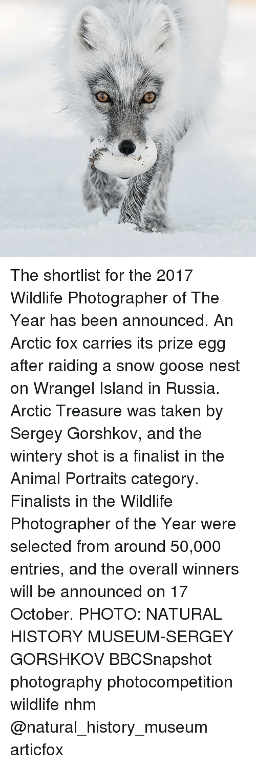 Memes, Taken, and Animal: The shortlist for the 2017 Wildlife Photographer of The Year has been announced. An Arctic fox carries its prize egg after raiding a snow goose nest on Wrangel Island in Russia. Arctic Treasure was taken by Sergey Gorshkov, and the wintery shot is a finalist in the Animal Portraits category. Finalists in the Wildlife Photographer of the Year were selected from around 50,000 entries, and the overall winners will be announced on 17 October. PHOTO: NATURAL HISTORY MUSEUM-SERGEY GORSHKOV BBCSnapshot photography photocompetition wildlife nhm @natural_history_museum articfox
