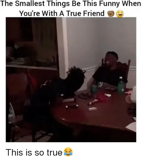 Funny, Memes, and True: The Smallest Things Be This Funny When  You're With A True Friend This is so true😂