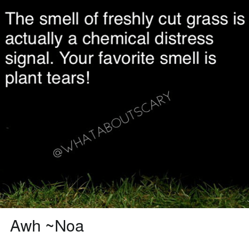 Distression: The smell of freshly cut grass is  actually a chemical distress  signal. Your favorite smell is  plant tears!  OWHATABOUTSCARY Awh ~Noa