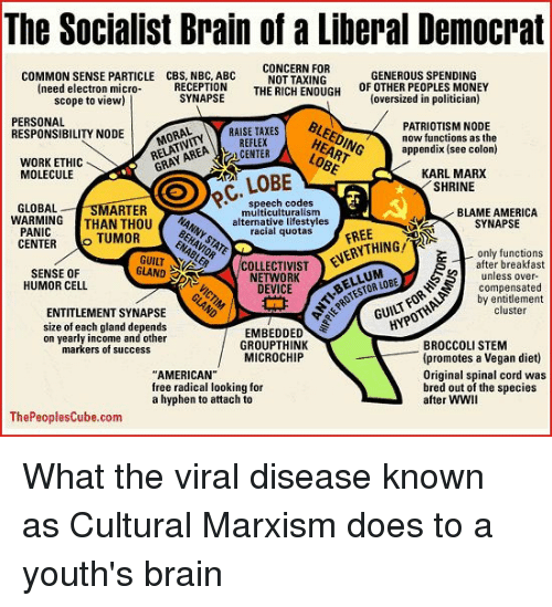 The Socialist Brain of a Liberal Democrat CONCERN FOR ...