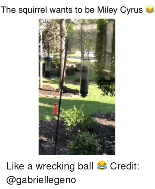 wrecking: The squirrel wants to be Miley Cyrus se Like a wrecking ball 😂 Credit: @gabriellegeno