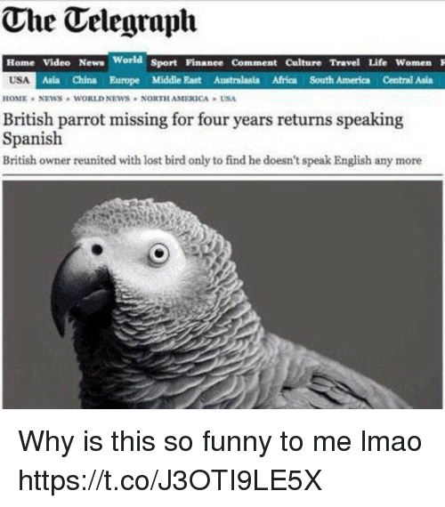 Africa, America, and Funny: The Telegraph  Home Video News  USA  World sport Finanee Comment Culture Travel Life Women  Asia China Europe Middle East Australasia Africa South America Central Asia  HOME , NEWS WORLD NEWS . NORTH AMERCA » USA  British parrot missing for four years returns speaking  Spanish  British owner reunited with lost bird only to find he doesn't speak English any more Why is this so funny to me lmao https://t.co/J3OTI9LE5X